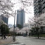 六本木アークヒルズ周辺の桜
