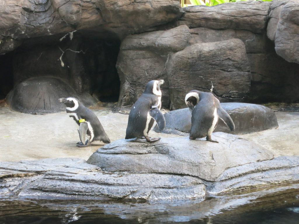 ヒルトンハワイアンビレッジ ペンギン
