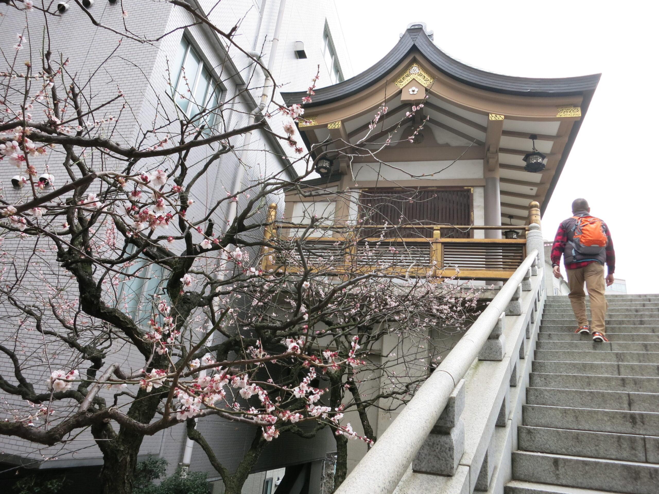 湯島天神 階段