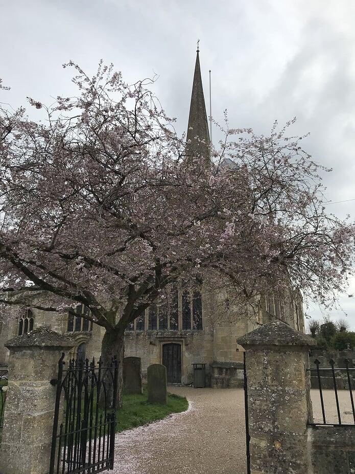 桜とバーフォードの教会